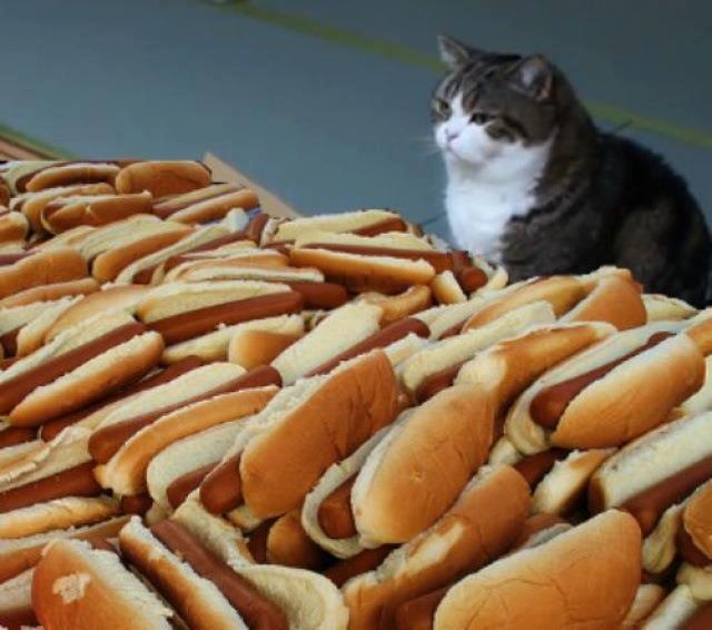 hotdogcat